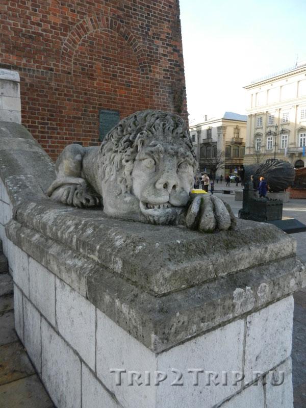 Лев у башни, Рыночная площадь, Краков