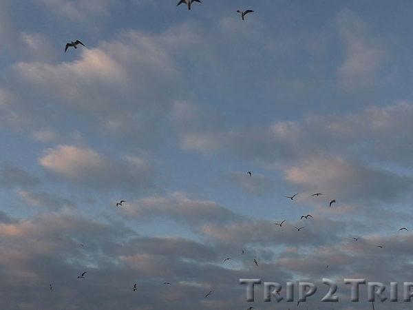 Чайки над Цюрихских озером