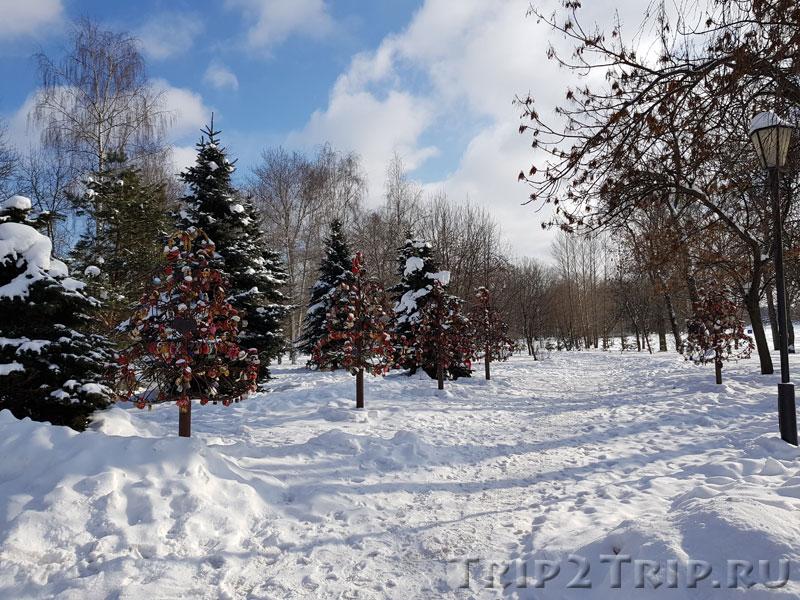 Фото деревьев для замков влюбленных около Часовни Казанской Богоматери в Ярославле
