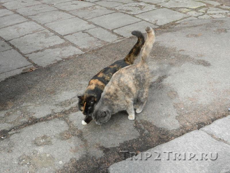 Фотосессия выборгских котиков
