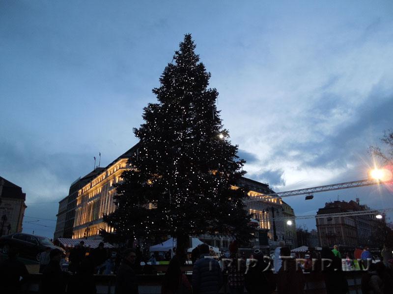 Рождественская елка, площадь Гвездослава, Братислава