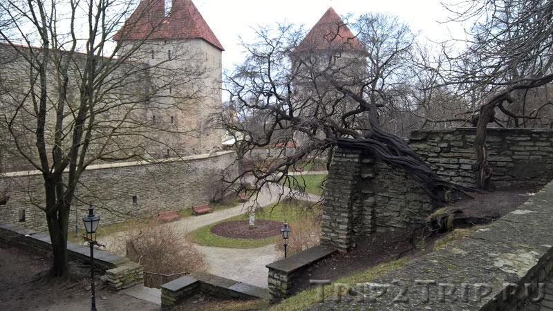 Сад Датского короля, Таллин