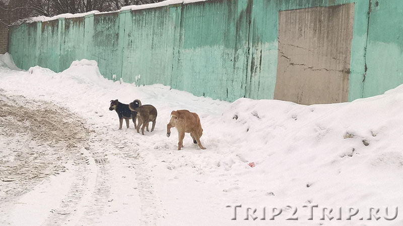 Милые песики на остановке в Переславле-Залесском