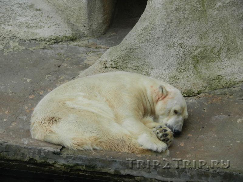 Вольер с белым медведем