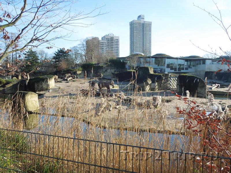 Слоновий вольер, кёльнский зоопарк