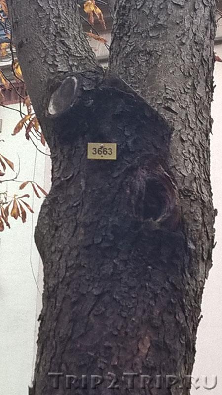 Пронумерованное дерево, улица Юбнер, Мюлуз