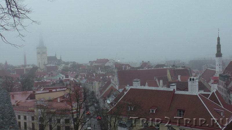 Крыши Таллина - Олевисте и церковь Святого Духа