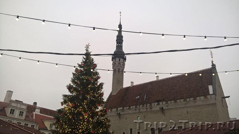 Ратуша, Таллин