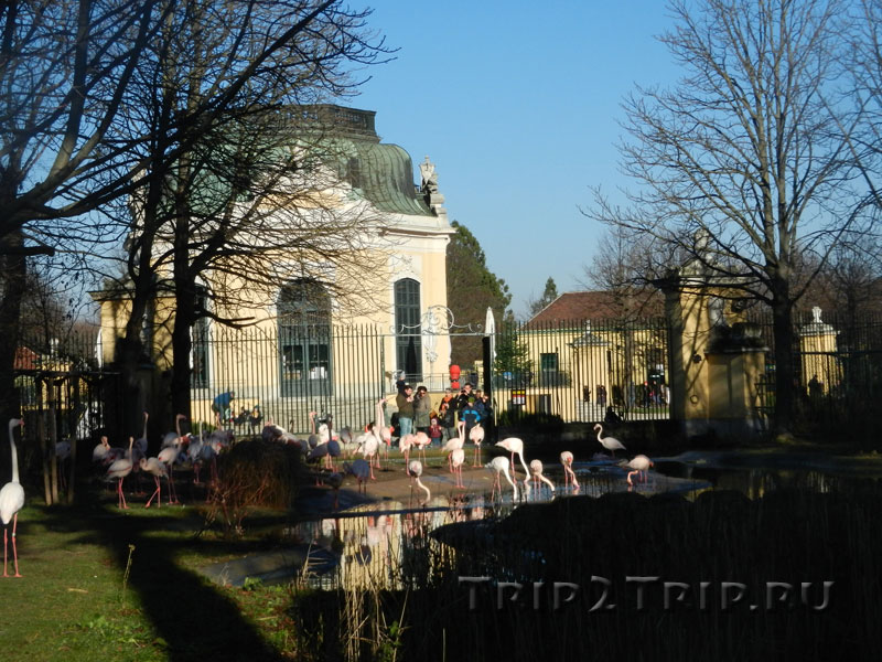 Пруд фламинго и самый старый павильон, венский зоопарк