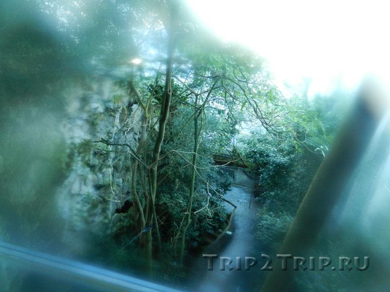Внутри павильона дождевых лесов, венский зоопарк