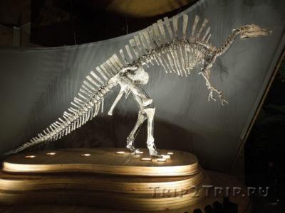 Скелет уранозавра, Музей Естественной Истории, Фондаки деи Турки, Венеция