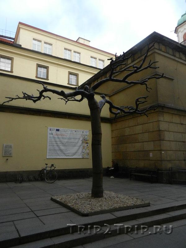 Древо Познания, Клементинум, Прага