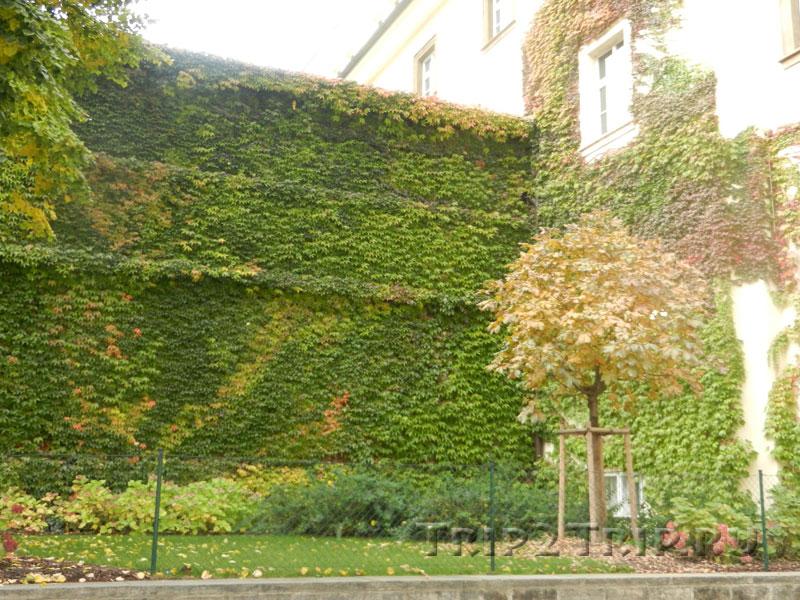 Виноградный дворик, Клементинум, Прага