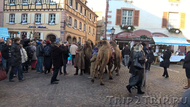 Верблюды на рождественской ярмарке, Рибовилле
