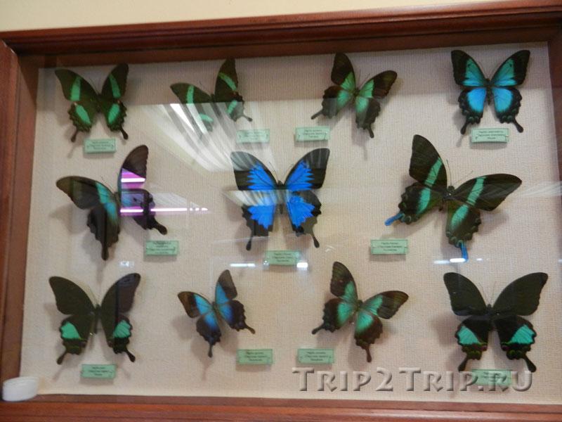 Музей бабочек в Анапе