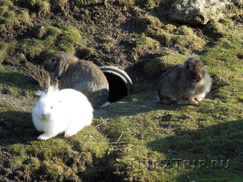 Альпийская горка с кроликами, Венский зоопарк