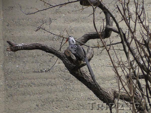 Птица в Базельском зоопарке