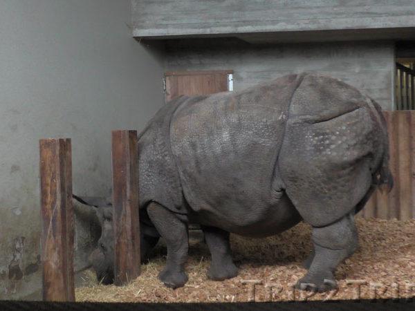 Носорог, Базельский зоопарк