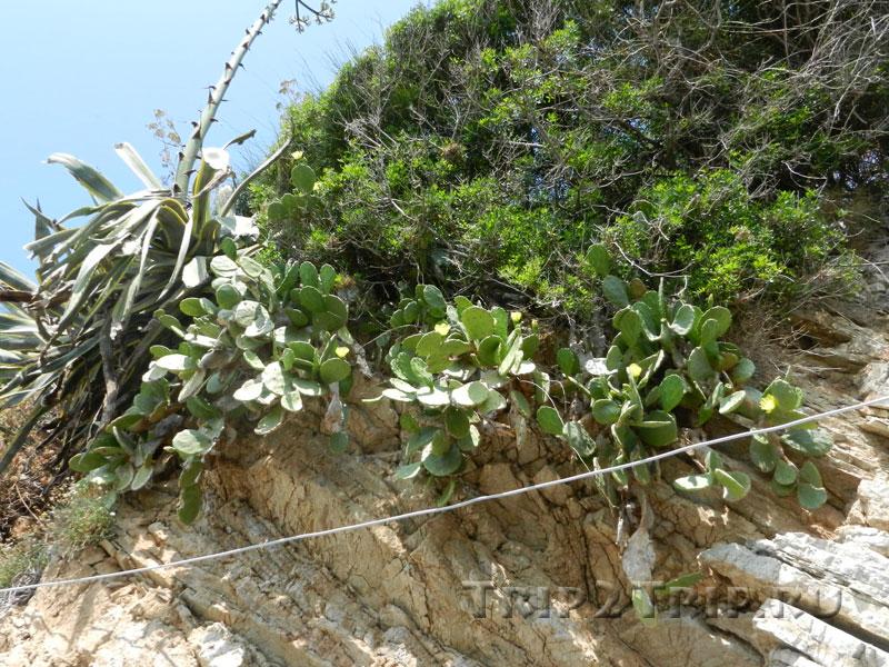 Кустарники на скала вблизи пляжа Могрен