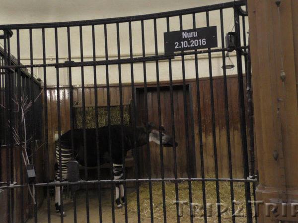 Базельский зоопарк