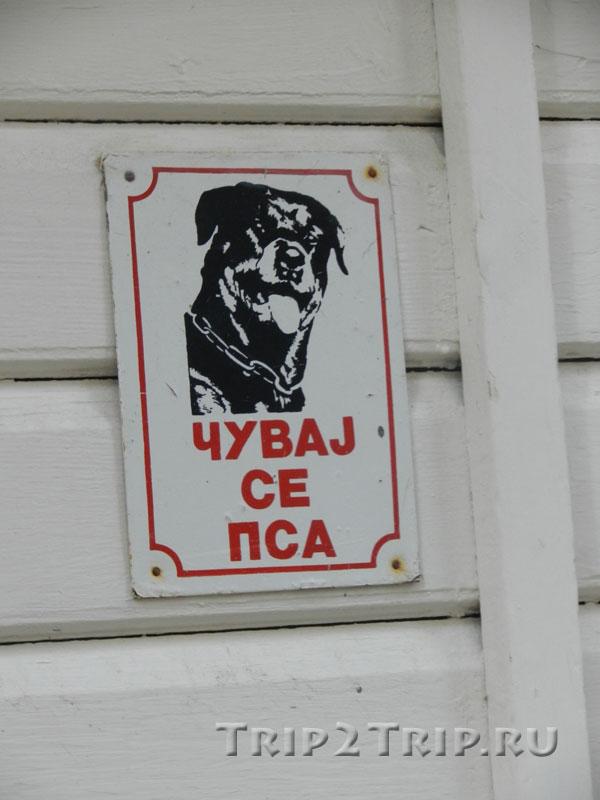 """""""Осторожно, злая собака!"""" на черногорском языке"""